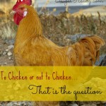 To Chicken or Not to Chicken?  That is the Question